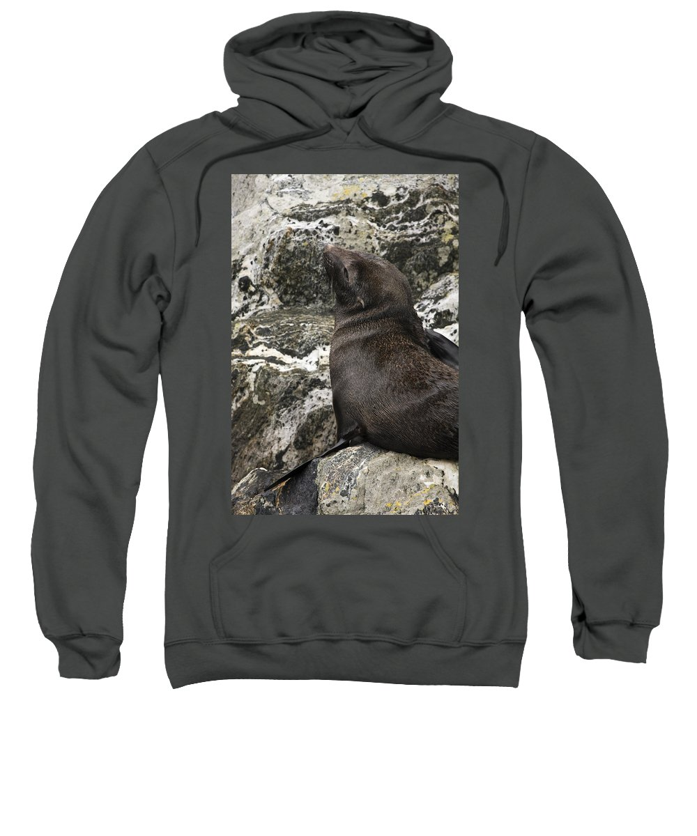 Sea Lion On Rock Sweatshirt featuring the photograph Sea Lion Close-up by Sally Weigand