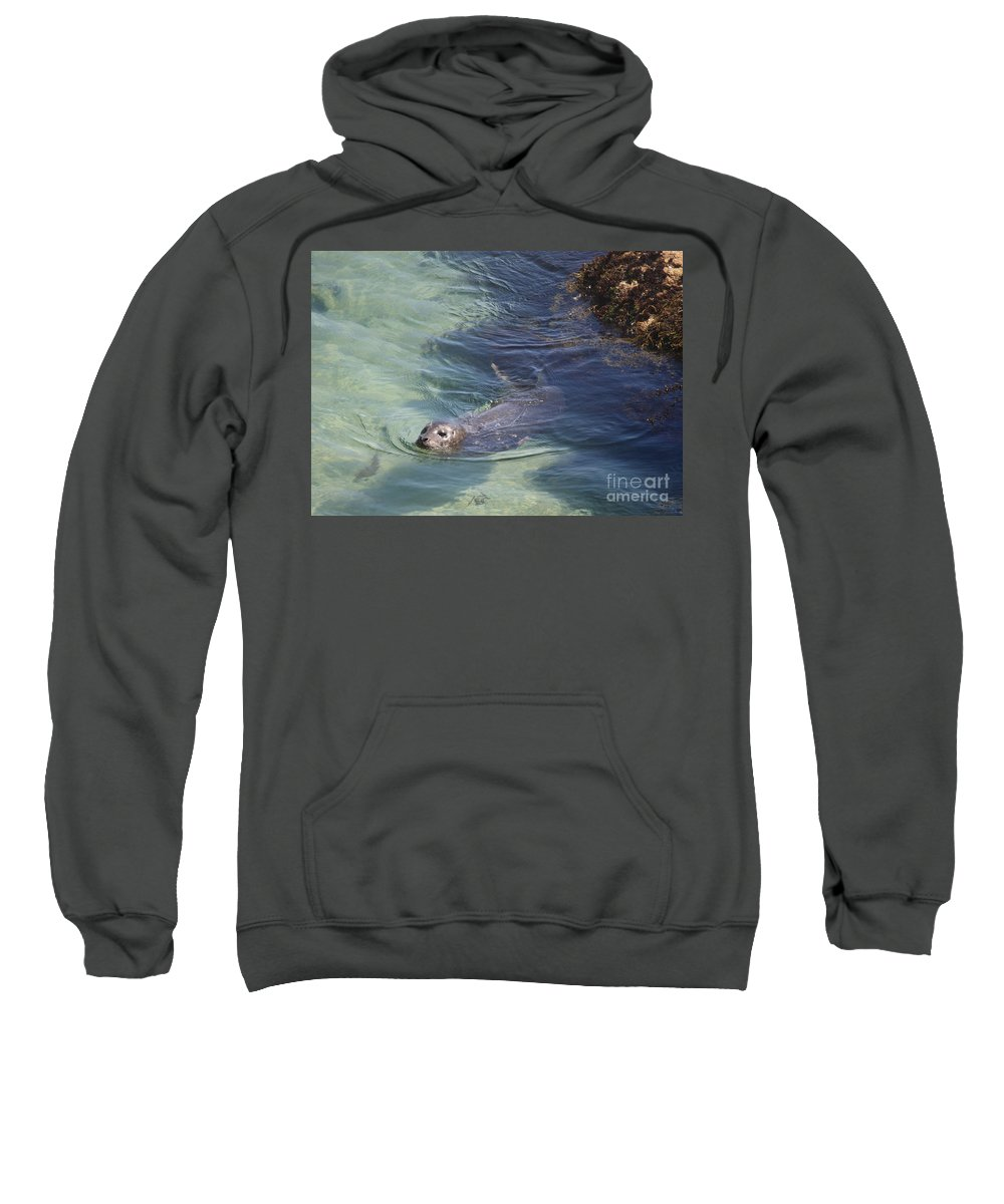Sea Lion Sweatshirt featuring the photograph Sea Lion In Clear Blue Waters by Carol Groenen