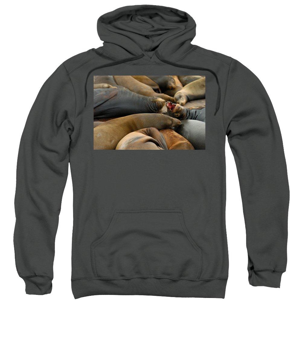 Sea Lions Pier 39 San Francisco Animal Photography Sweatshirt featuring the photograph Sea Lions At Pier 39 San Francisco by Sebastian Musial