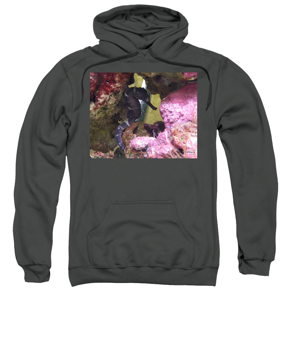 Faunagraphs Sweatshirt featuring the photograph Seahorse3 by Torie Tiffany
