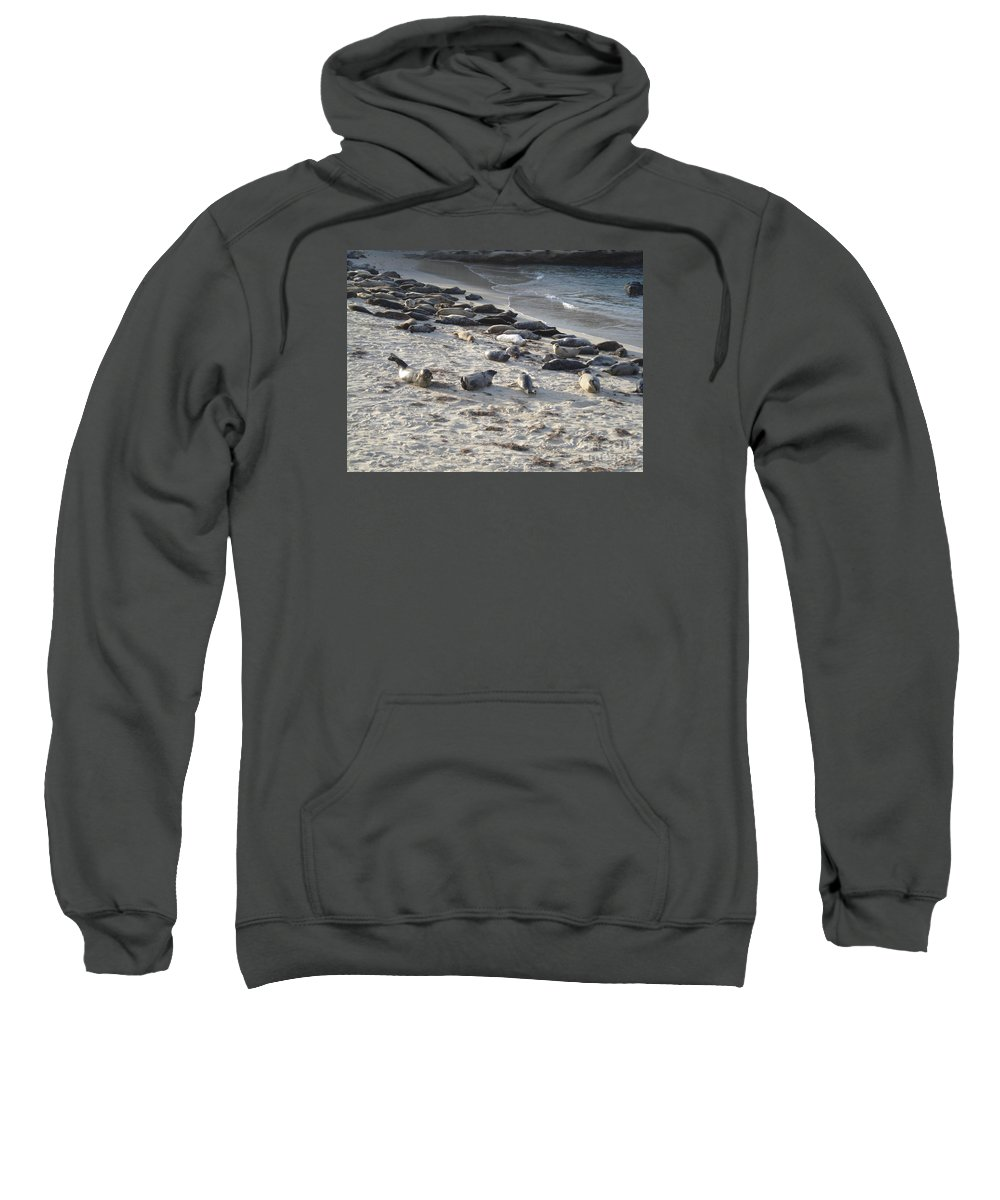 Seals Sweatshirt featuring the photograph Seals, Seals, And More Seals by Madilyn Fox