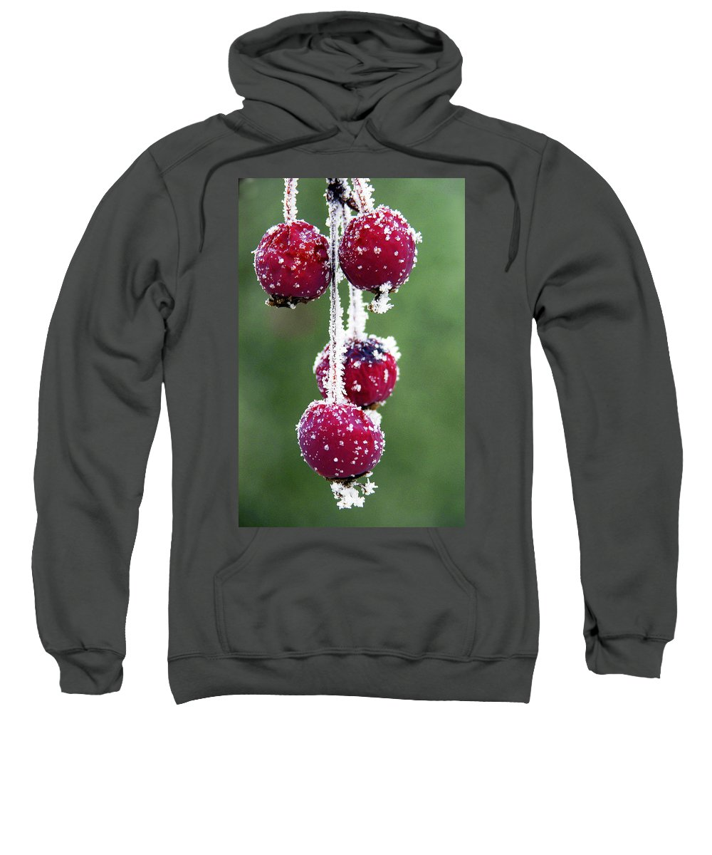 Berries Sweatshirt featuring the photograph Seasonal Colors by Marilyn Hunt