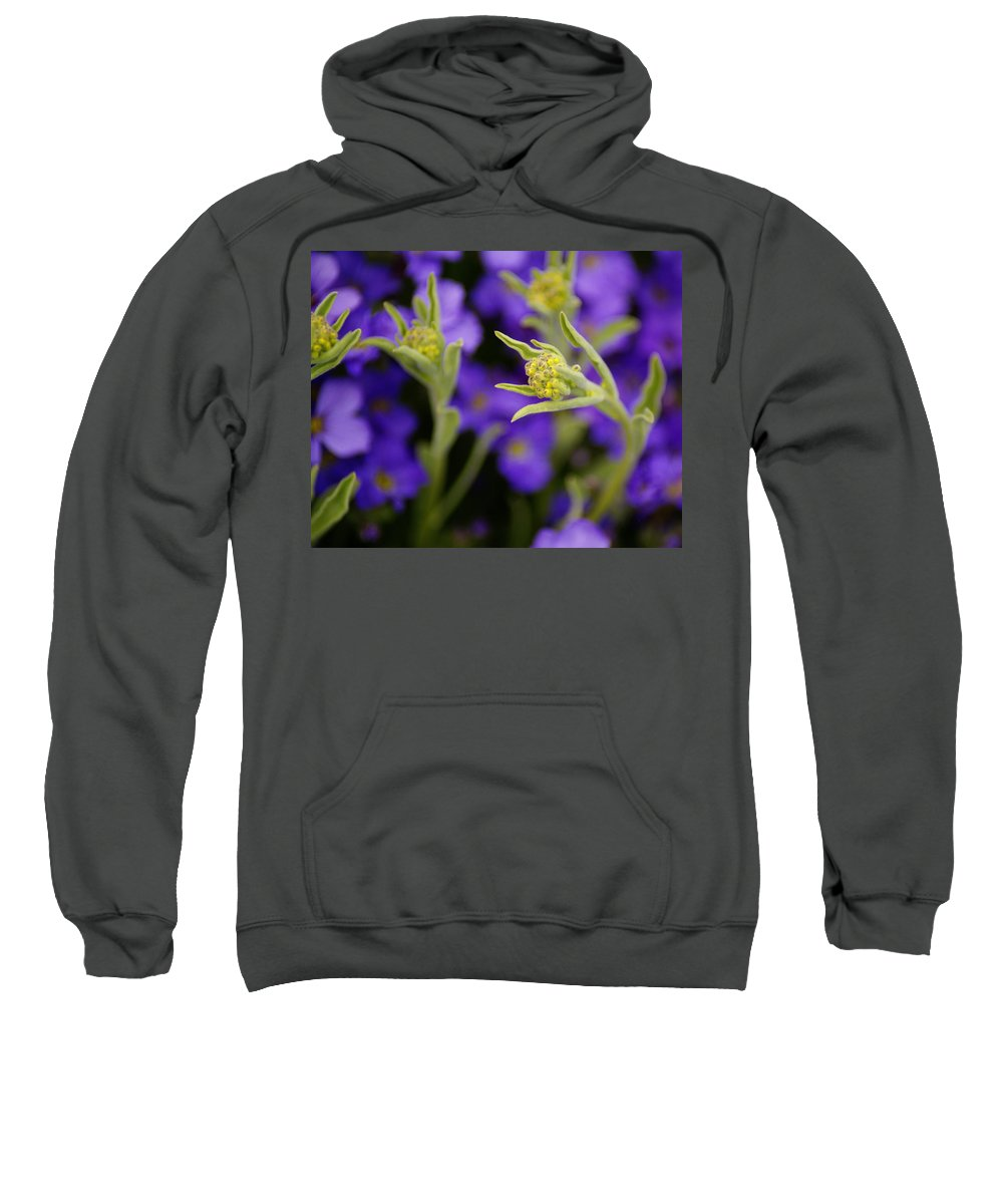 Flowers Sweatshirt featuring the photograph Seeking The Day's Energy by Ben Upham III