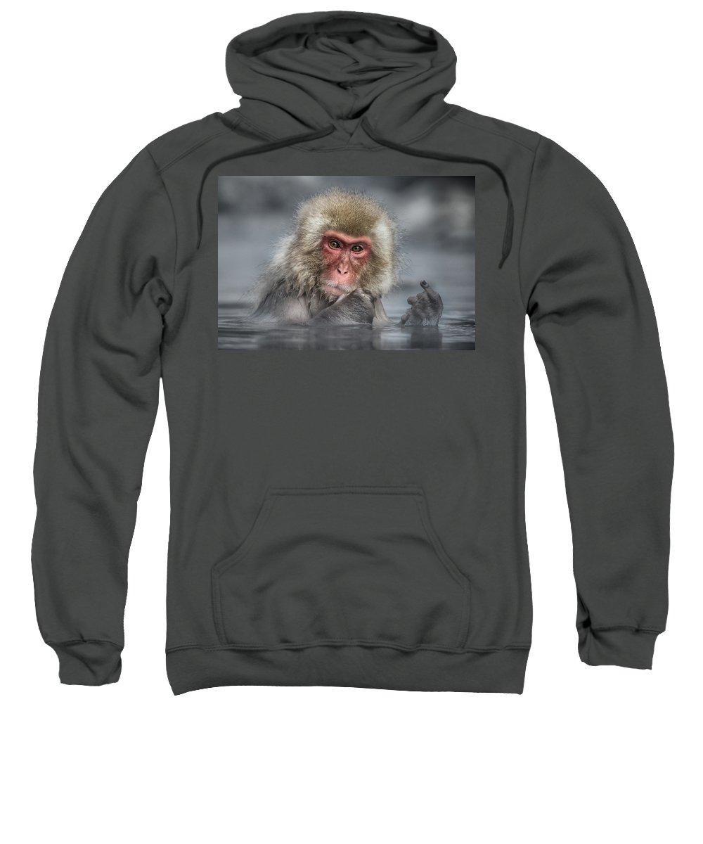 Japanese Snow Monkey Hooded Sweatshirts T-Shirts