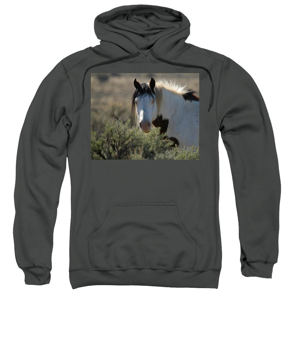 Wild Horses Sweatshirt featuring the photograph Shaman by Steve McKinzie