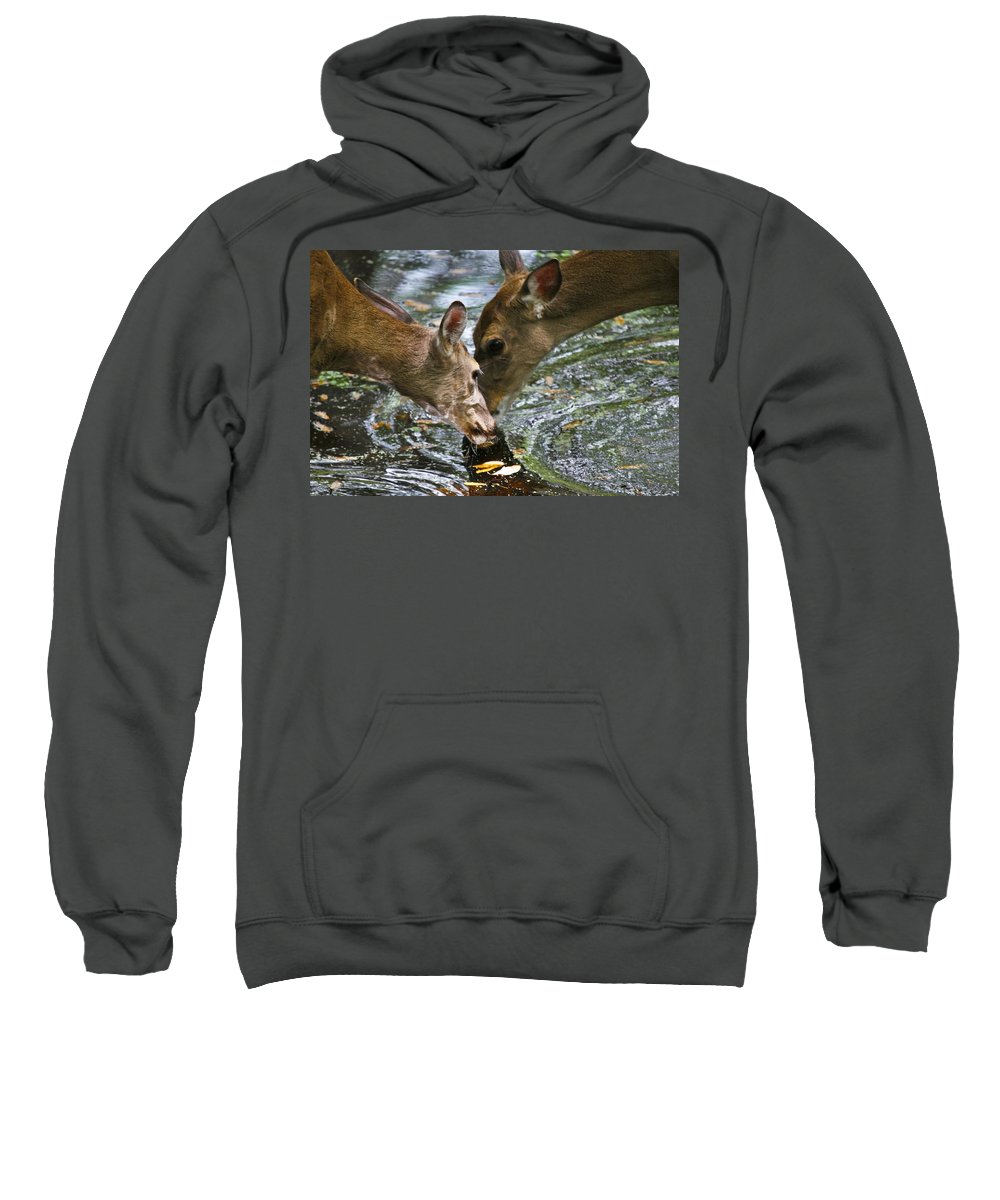 Animals Sweatshirt featuring the photograph Sharing by Taylor Howe