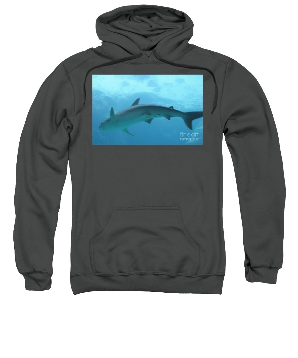 Fish Sweatshirt featuring the photograph Shark by Michelle Powell