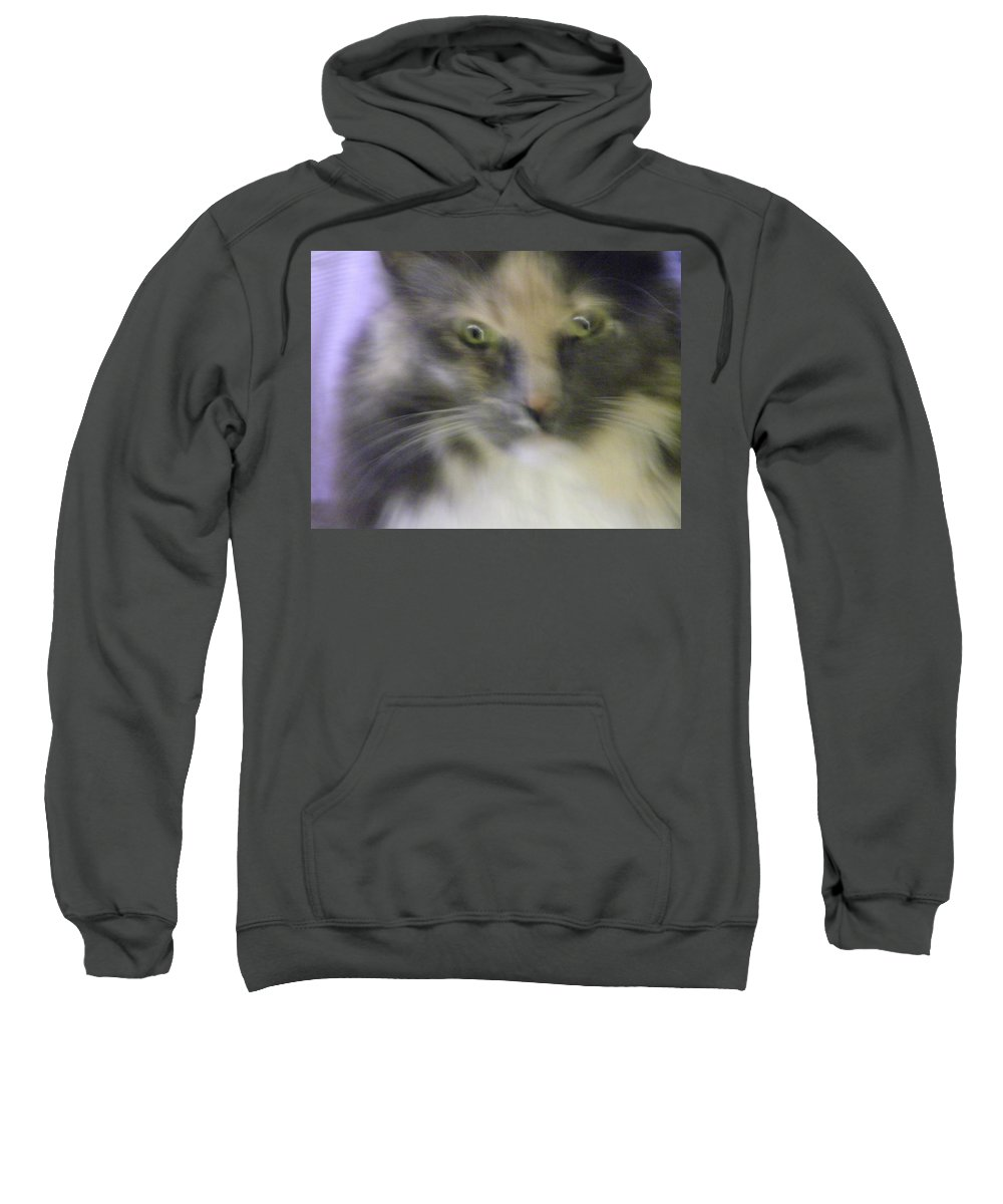 Abstract Sweatshirt featuring the photograph Shelby--dont Mess With Me by Lenore Senior
