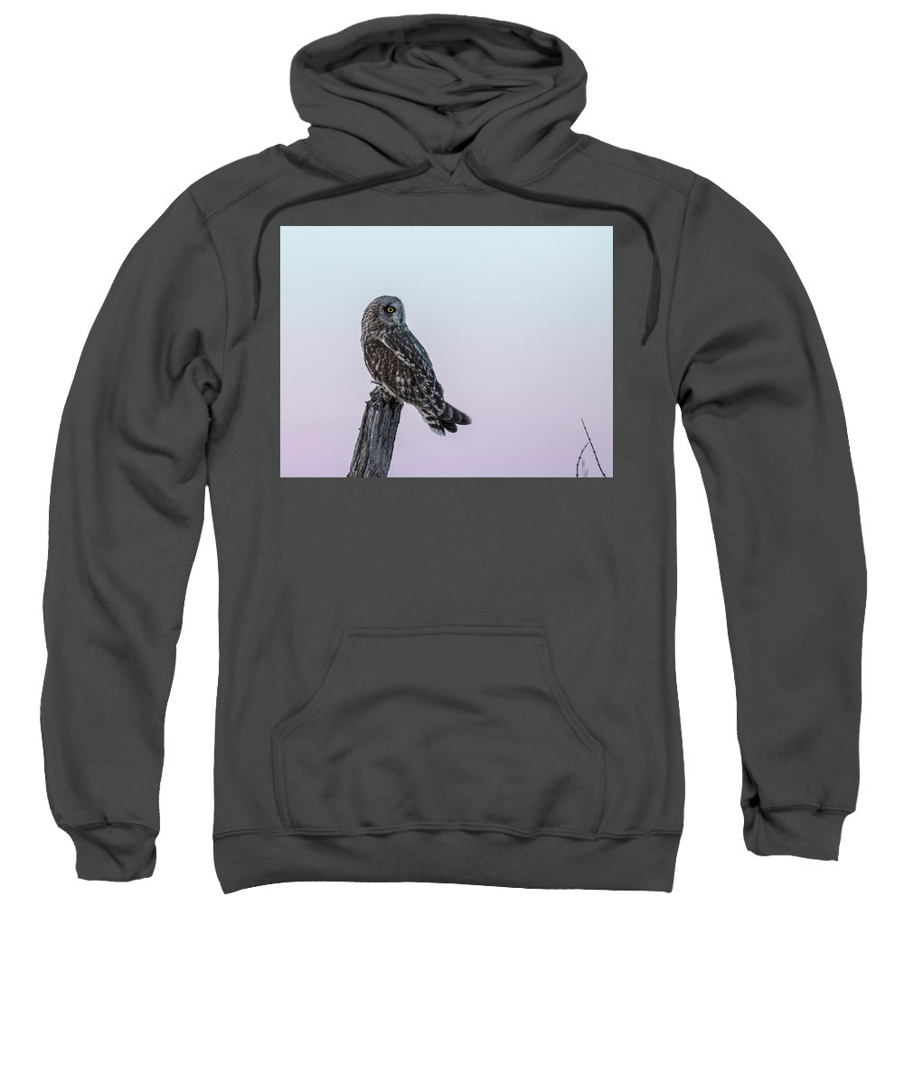 Short-eared Owl Sweatshirt featuring the photograph Short-eared Owl 2018-5 by Thomas Young
