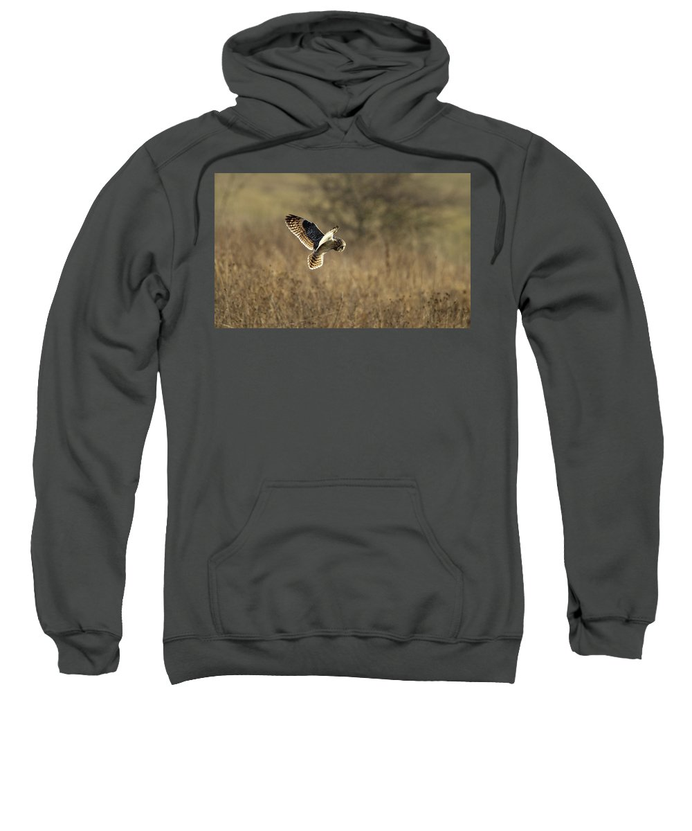 Birds Sweatshirt featuring the photograph Short-eared Owl About To Strike by Bob Kemp
