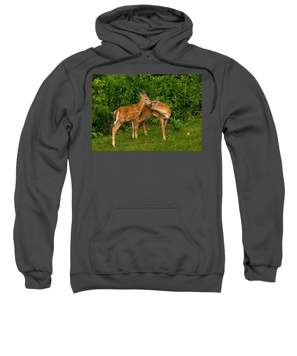Deer Sweatshirt featuring the photograph Sibling Love by Karol Livote