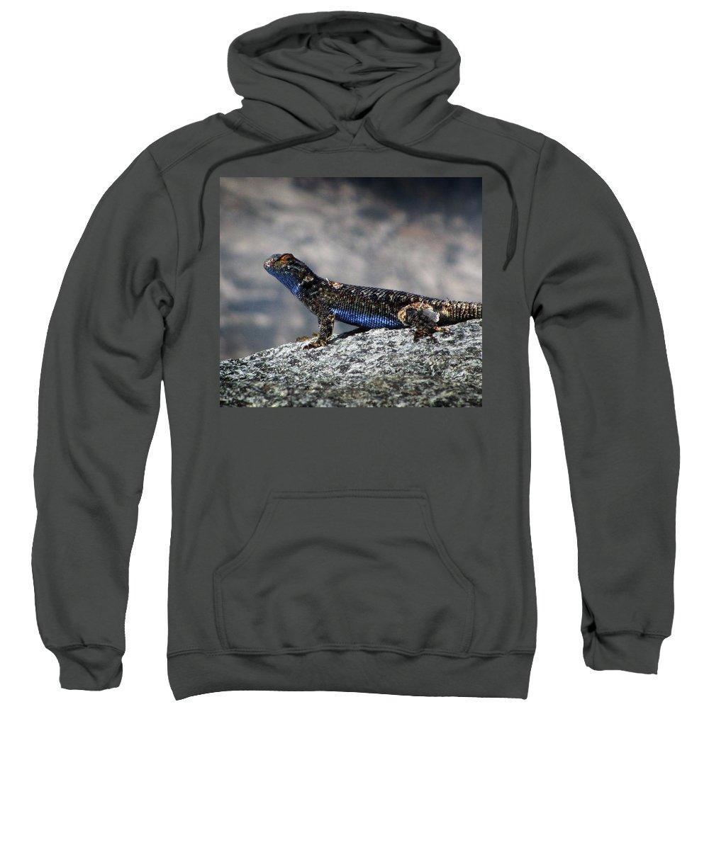 Sierra Sweatshirt featuring the photograph Sierra Fence Lizard 2 - Sierra by Bruce Lemons
