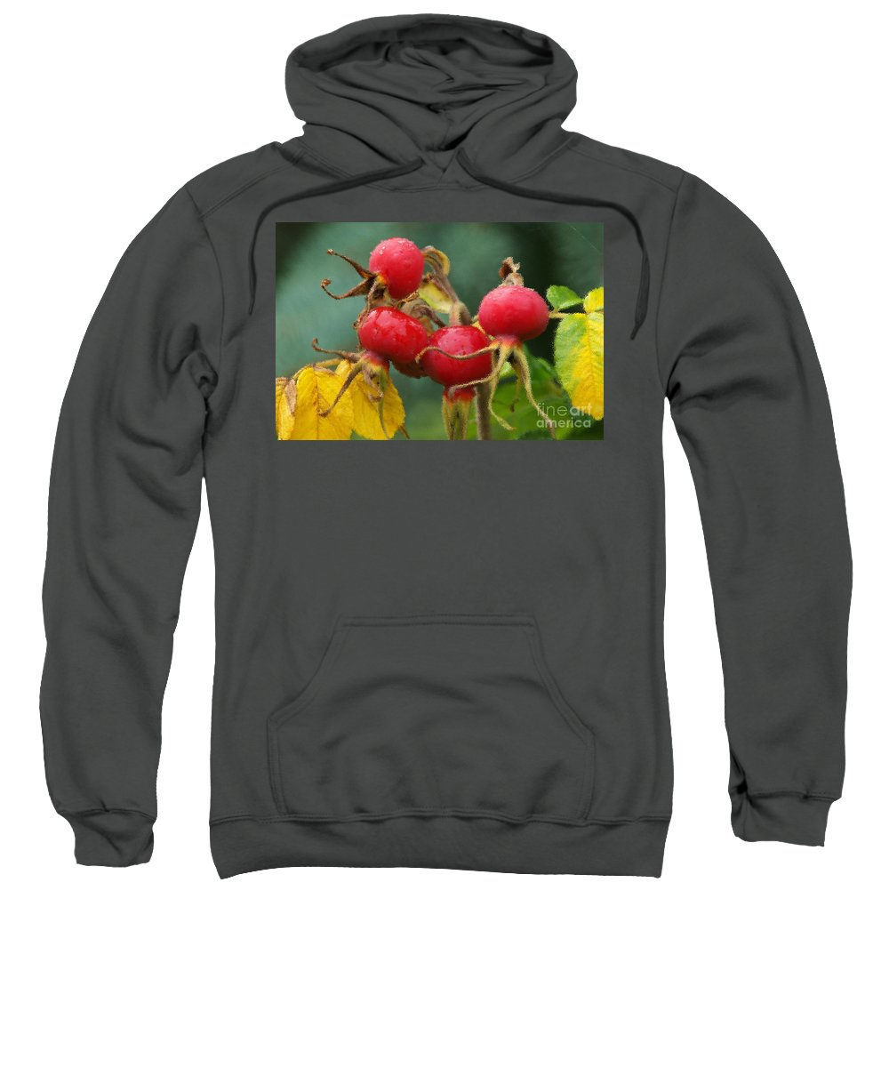 Fall Sweatshirt featuring the photograph Signs Of Fall 2 by Sharon Talson
