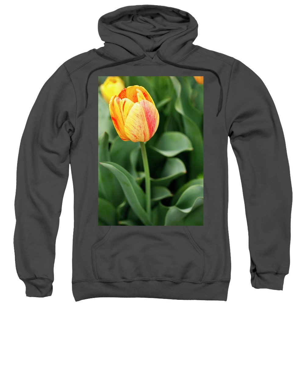 Tulip Sweatshirt featuring the photograph Signs Of Spring by Marilyn Hunt