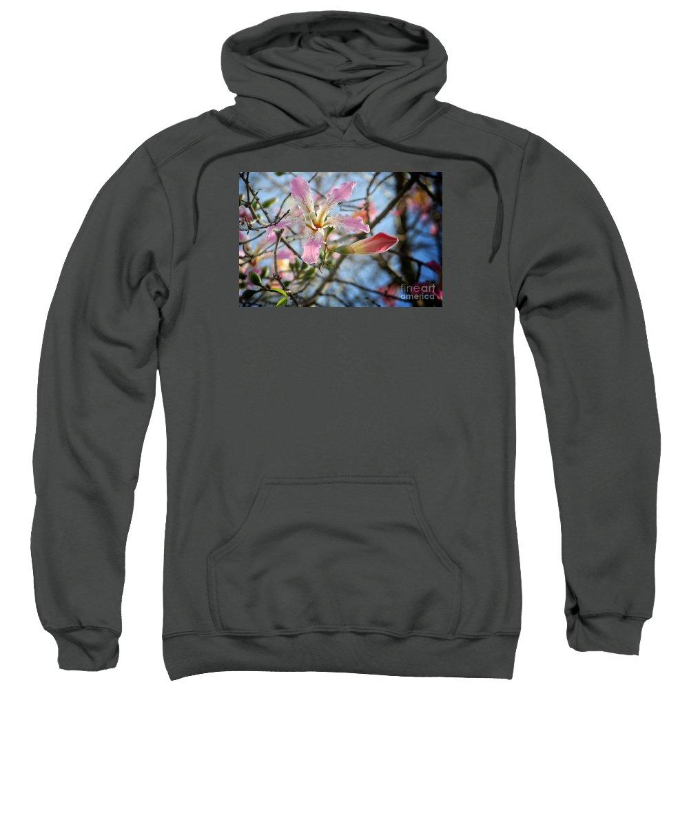 Silk Floss Bloom Sweatshirt featuring the photograph Silk Floss by Paula Contreras