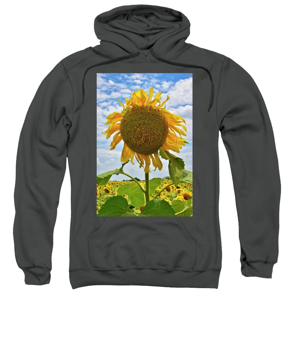 Sister Golden Hair Sweatshirt featuring the photograph Sister Golden Hair by Skip Hunt