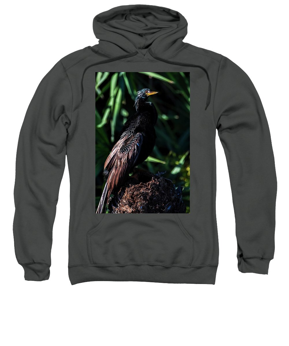 Florida Sweatshirt featuring the photograph Sitting In The Sun by Cyndy Doty
