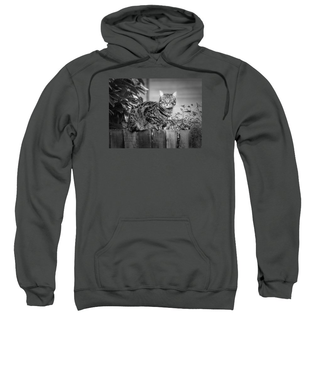 Cat Sweatshirt featuring the photograph Sitting On The Fence by Nick Bywater