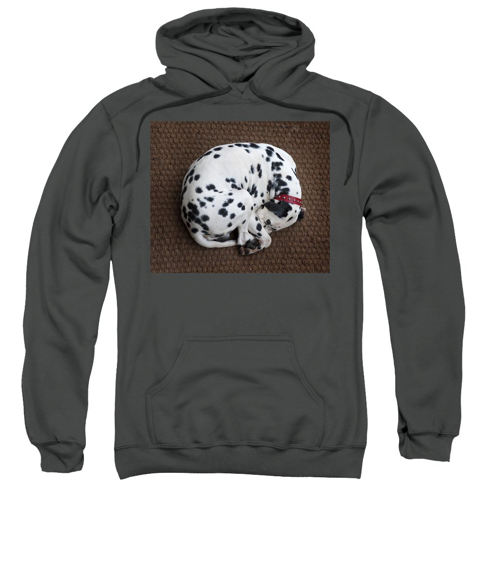 Dog Sweatshirt featuring the photograph Sleeping Dalmatian II by Rafa Rivas