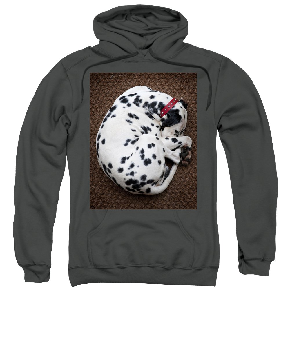 Dog Sweatshirt featuring the photograph Sleeping Dalmatian by Rafa Rivas