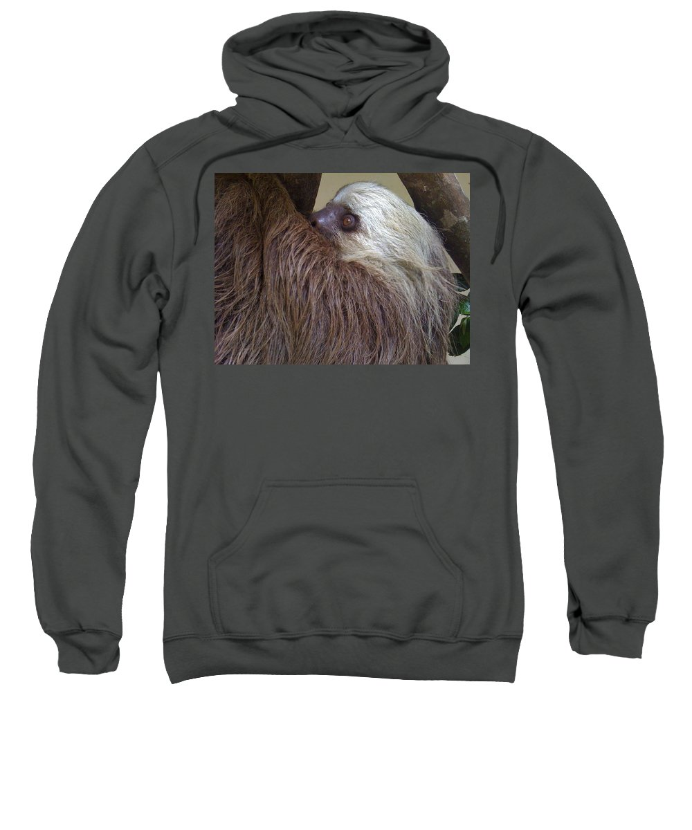 Sloth Sweatshirt featuring the photograph Sloth by Dolly Sanchez