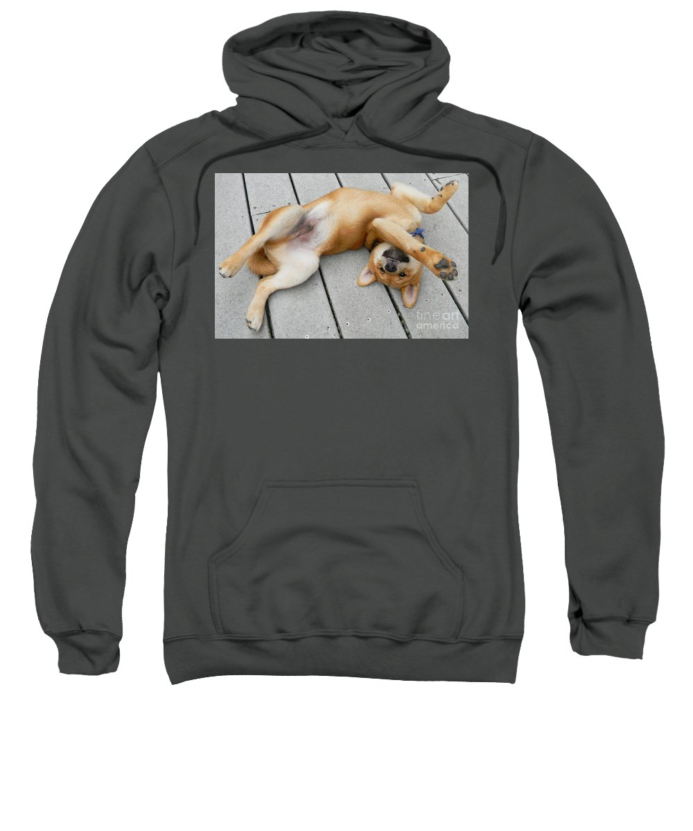 Puppy Inu Shiba 8weeks Toothy-grin Big Happy Smile Sweatshirt featuring the photograph Smiling Puppie by Expressionistart studio Priscilla Batzell
