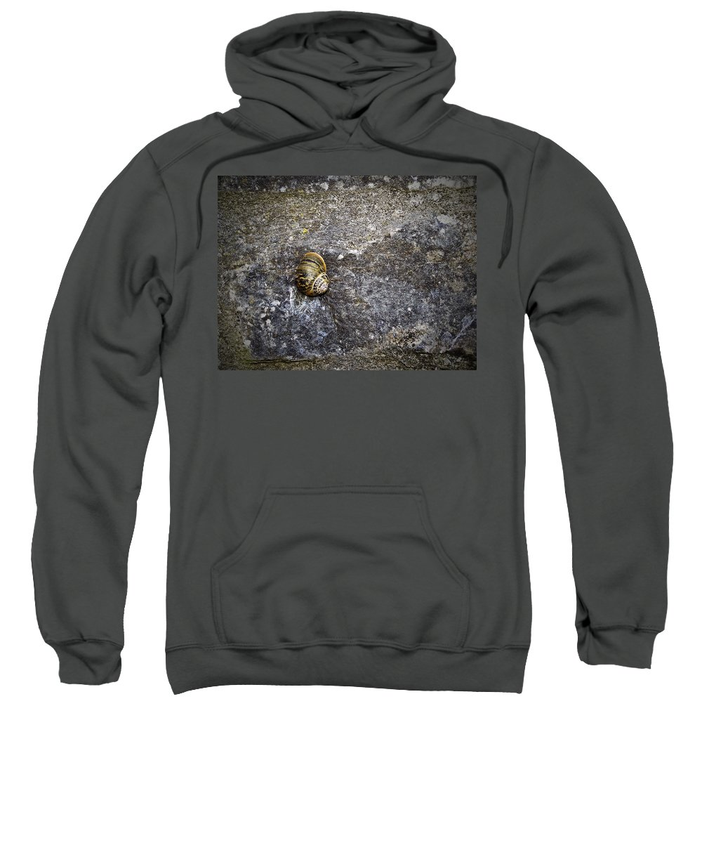 Irish Sweatshirt featuring the photograph Snail At Ballybeg Priory County Cork Ireland by Teresa Mucha