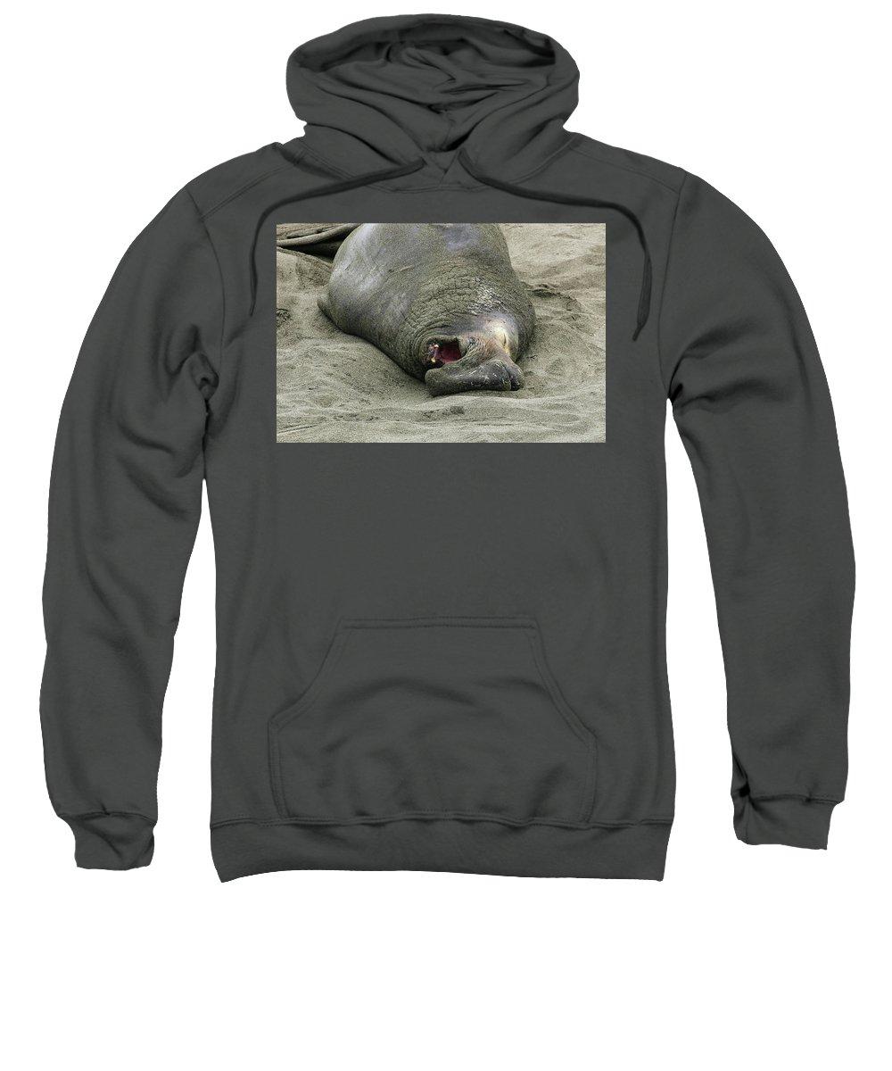 Elephant Sweatshirt featuring the photograph Snoring Elephant Seal by Anthony Jones