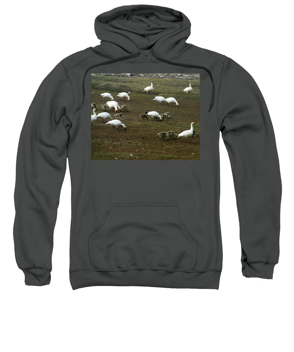 Snow Geese Sweatshirt featuring the photograph Snow Geese by Anthony Jones