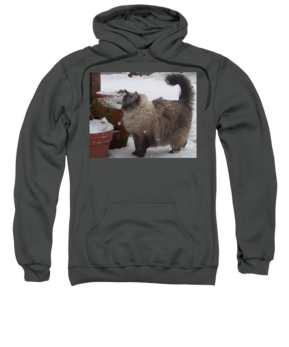 Cats Sweatshirt featuring the photograph Snow Kitty by Debbi Granruth