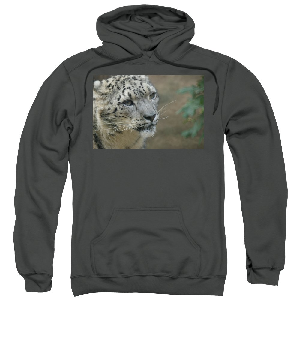 Animals Sweatshirt featuring the photograph Snow Leopard 8 by Ernie Echols