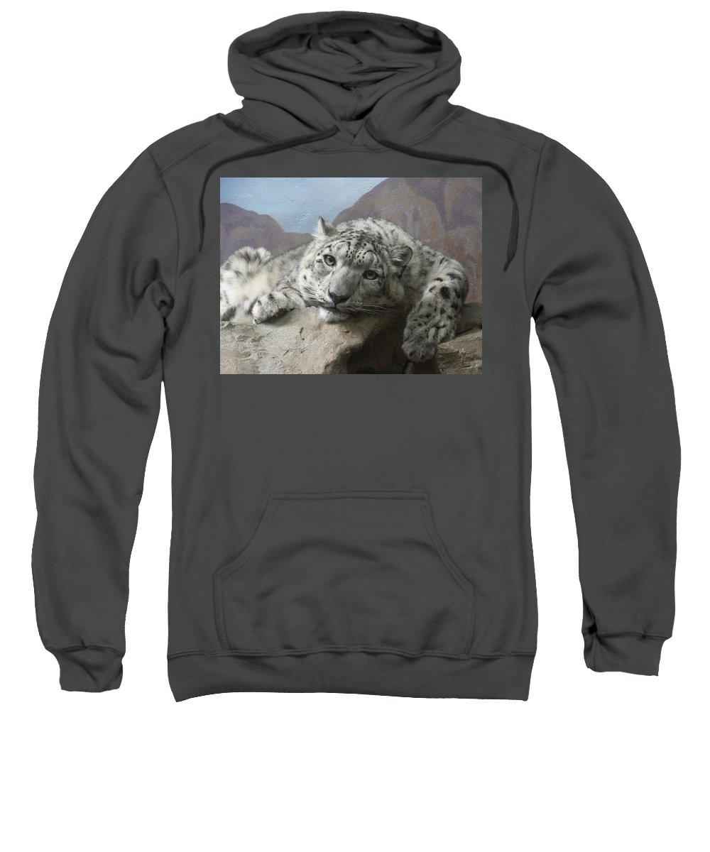 Snow Leopards Sweatshirt featuring the photograph Snow Leopard Relaxing by Ernie Echols