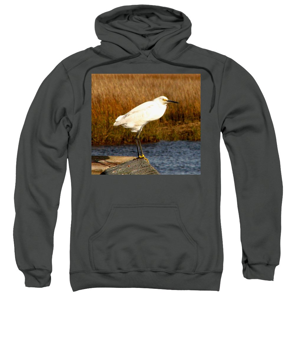 Bird Egret snowy Egret white Egret Seabird Animals Nature Wildlife Sweatshirt featuring the photograph Snowy Egret 1 by J M Farris Photography