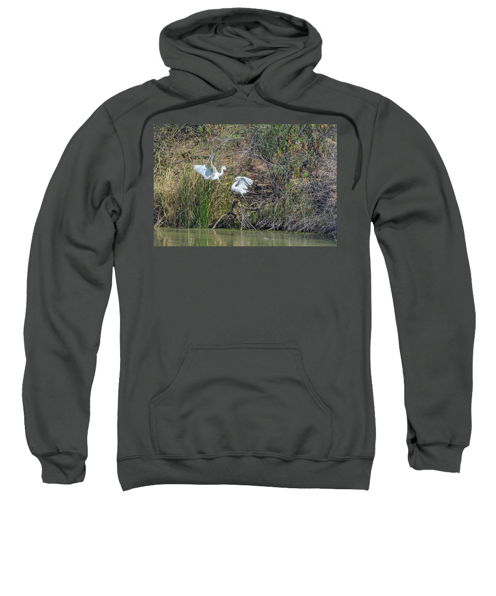 Snowy Sweatshirt featuring the photograph Snowy Egret Confrontation 8664-022018-1 by Tam Ryan