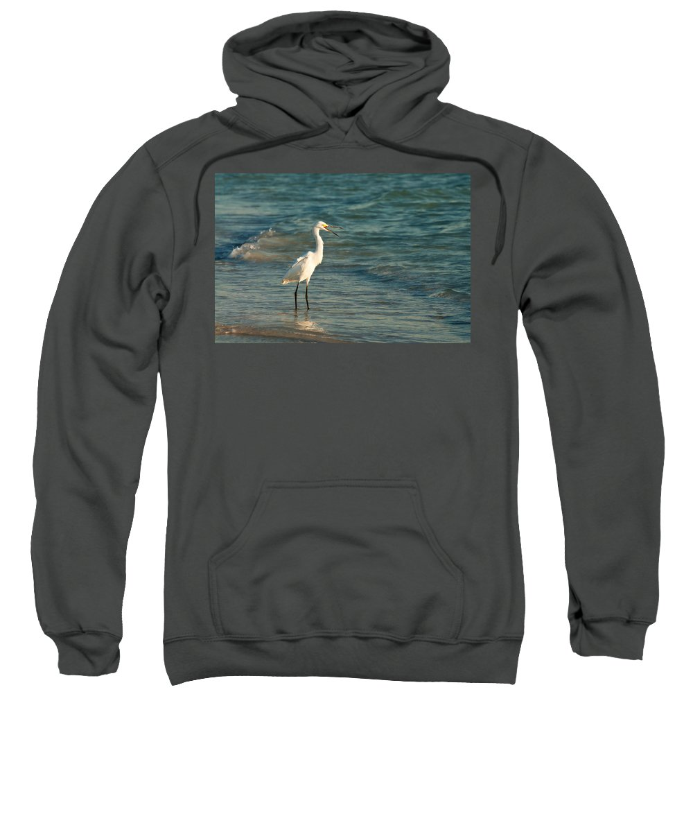 Florida Sweatshirt featuring the photograph Snowy Egret In Golden Light by Rich Leighton