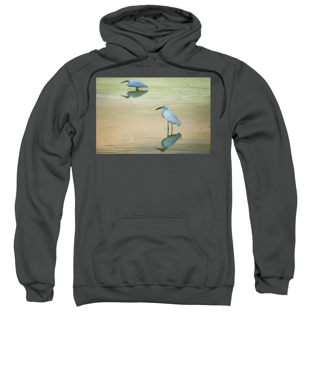 Snowy Egrets Sweatshirt featuring the photograph Snowy Egret Reflections by Saija Lehtonen