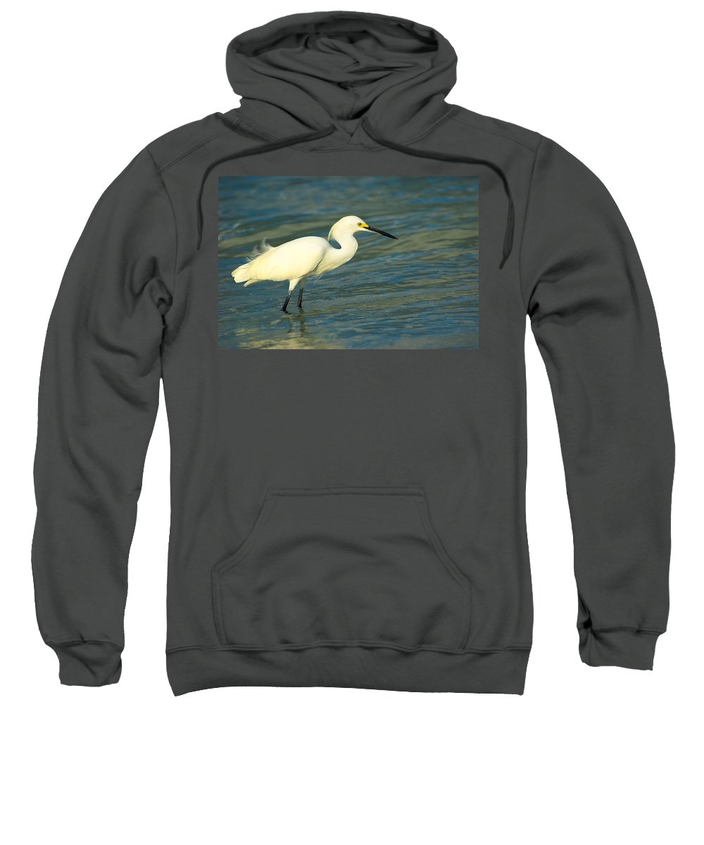 Animal Sweatshirt featuring the photograph Snowy Egret by Rich Leighton