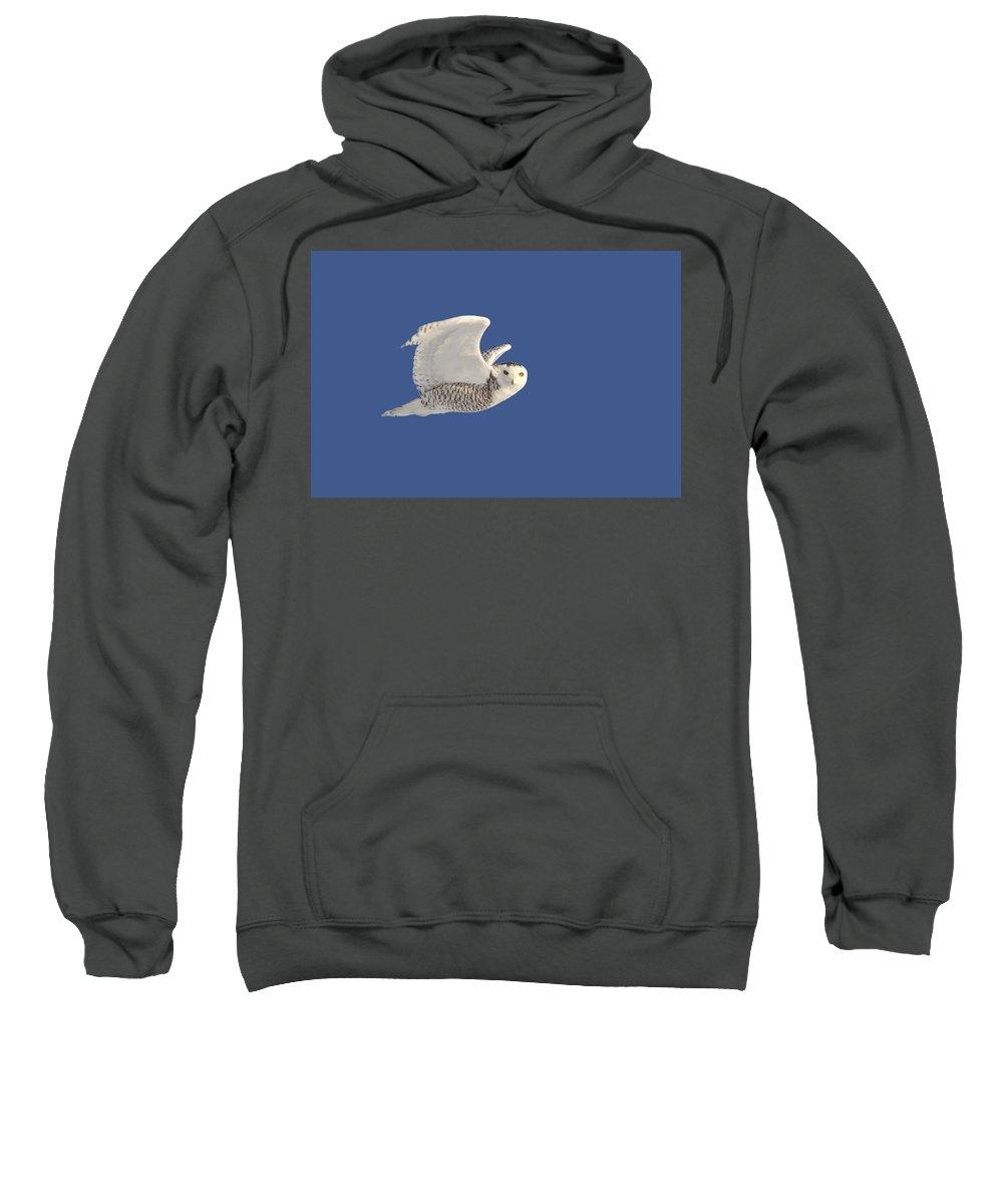 Snowy Owl Sweatshirt featuring the digital art Snowy Owl In Flight by Mark Duffy