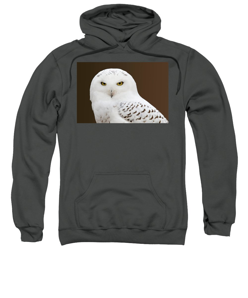 Snowy Owl Sweatshirt featuring the photograph Snowy Owl by Steve Stuller