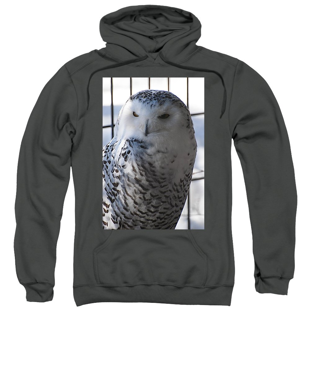 Sweatshirt featuring the photograph Snowy.owl by Galeria Trompiz
