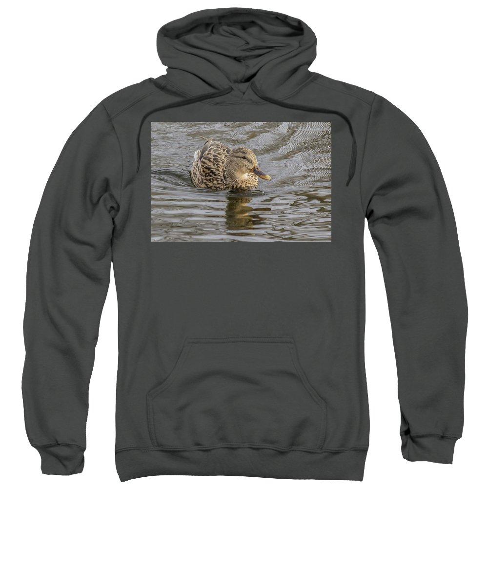 Duck Sweatshirt featuring the photograph Soaking Sun by Barbara Blanchard