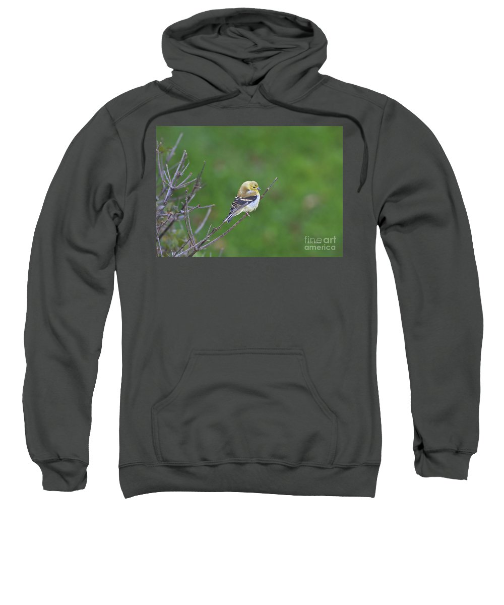 Bird Sweatshirt featuring the photograph Soft And Fluffy by Deborah Benoit