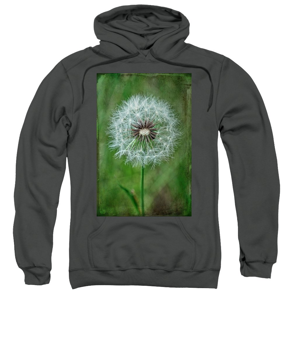 Still Life Sweatshirt featuring the photograph Softly Sitting by Jan Amiss Photography