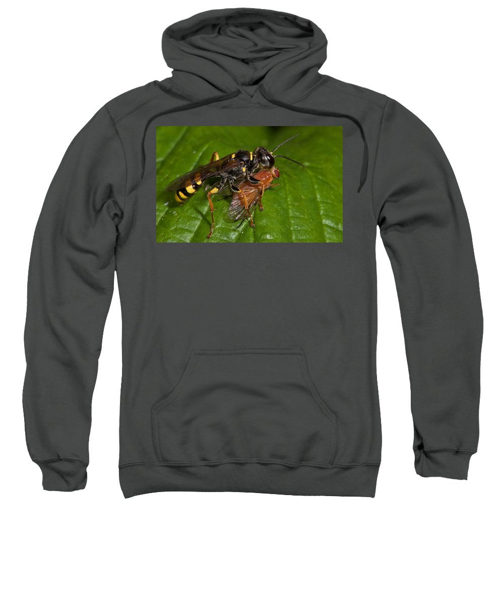Solitary Wasp Sweatshirt featuring the photograph Solitary Wasp by Bob Kemp