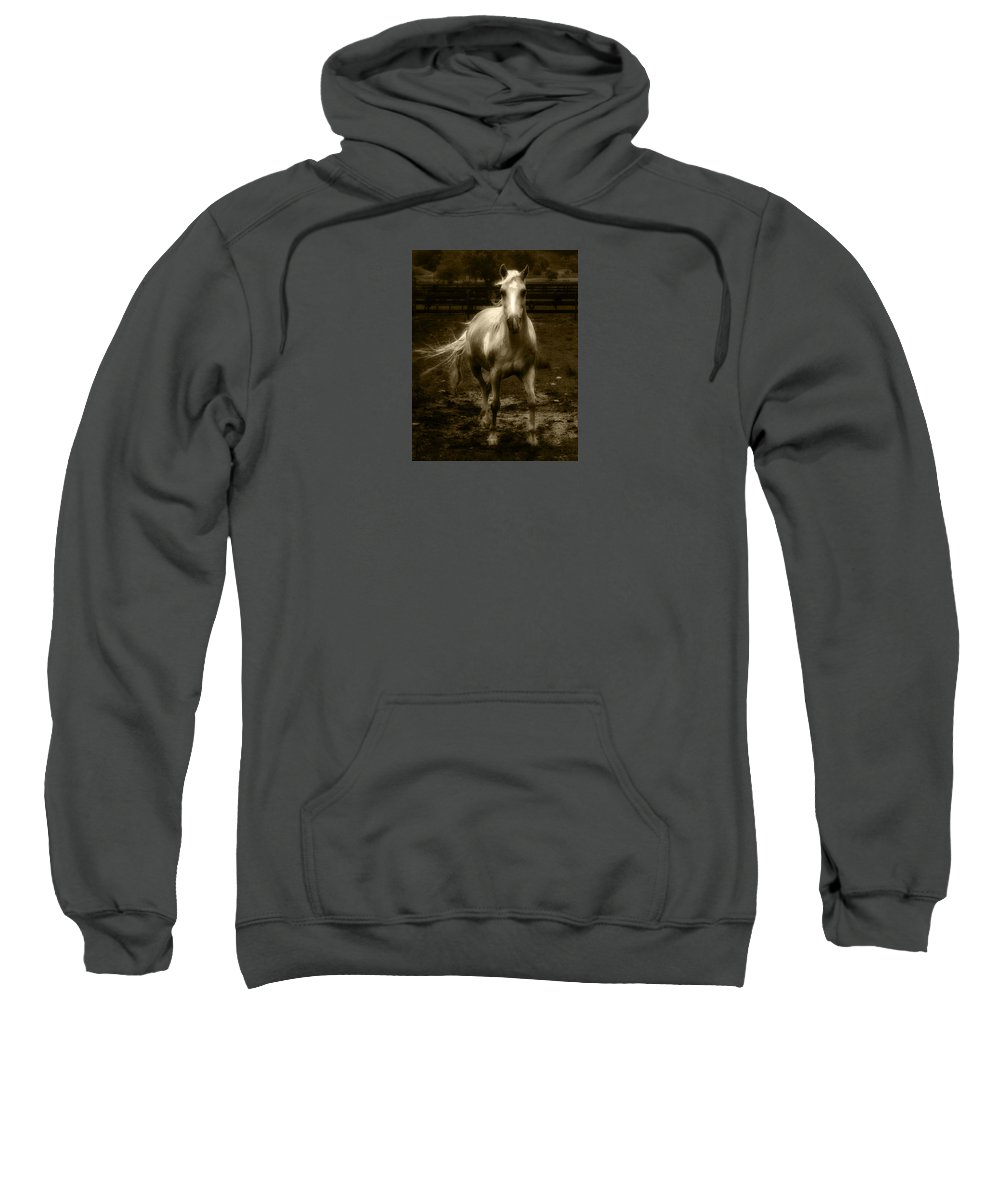 Horse Sweatshirt featuring the photograph Sonny by Frederica Georgia