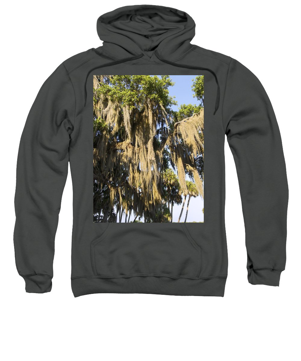 Spanish Moss Hanging Sweatshirt featuring the photograph Spanish Moss by Sally Weigand