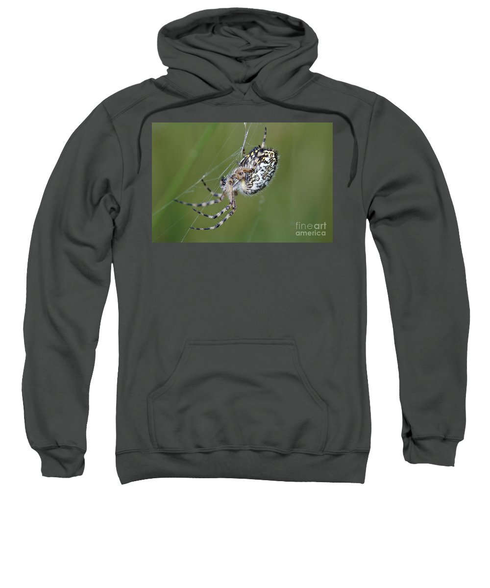 Insect Sweatshirt featuring the photograph Spider by Michal Boubin