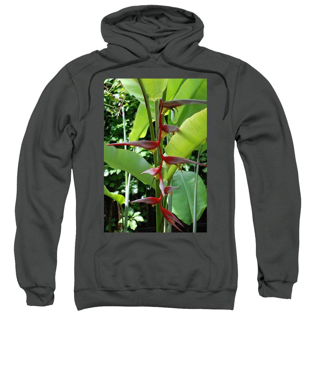 Macro Sweatshirt featuring the photograph Spike Tree by Rob Hans