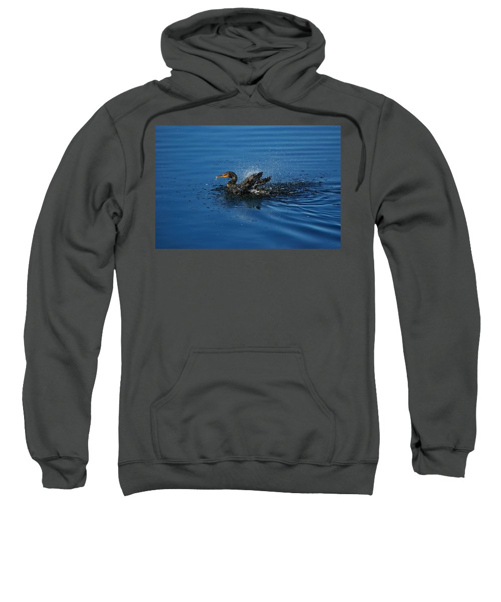 Animal Sweatshirt featuring the photograph Splashing Cormorant by Rich Leighton