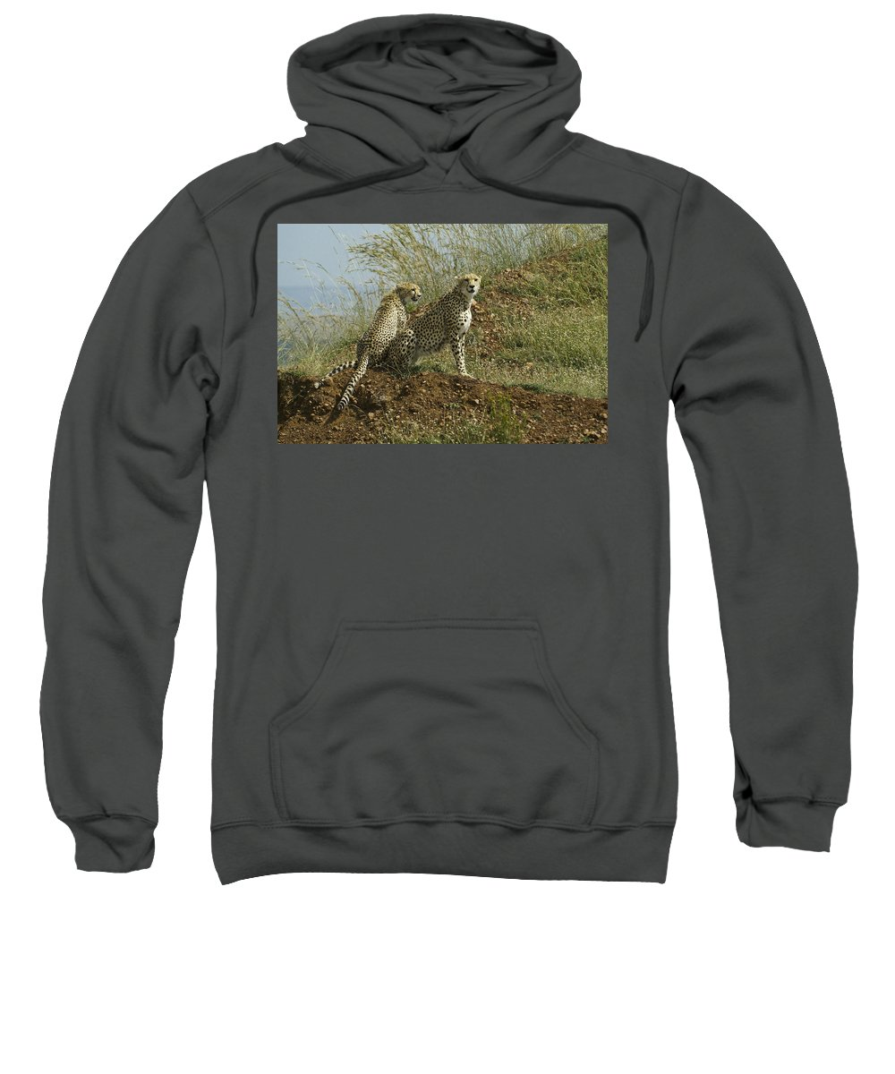 Africa Sweatshirt featuring the photograph Spotted Cats by Michele Burgess